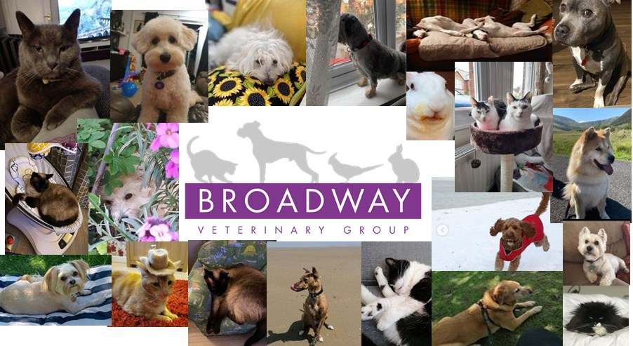 Broadway Veterinary Group